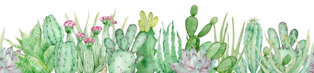 Watercolor seamless border of green cactuses. endless header with tropical plants and pink flowers isolated.