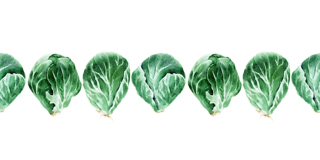 Watercolor seamless border with different types of cabbage. brussels sprouts