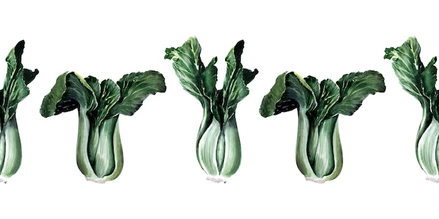 Watercolor seamless border with different types of cabbage. kale