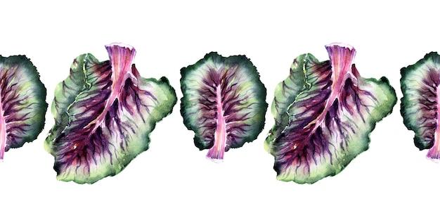 キャベツの種類と水彩のシームレスな境界線。芽キャベツ、ブロッコリー、ケール