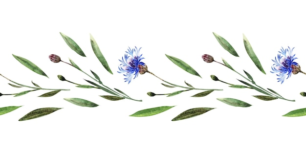 Watercolor seamless border with twigs, leaves, buds and flowers of the cornflower plant