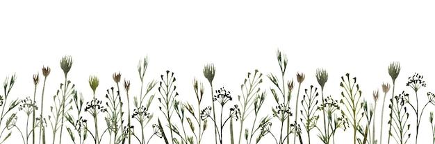 白い背景の上の野生のフィールドハーブ野草と水彩のシームレスな境界線
