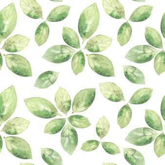 白い背景の上の芳香のバジルの葉と水彩のシームレスなパターン