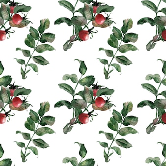 Watercolor seamless patterns with ripe bright rosehip