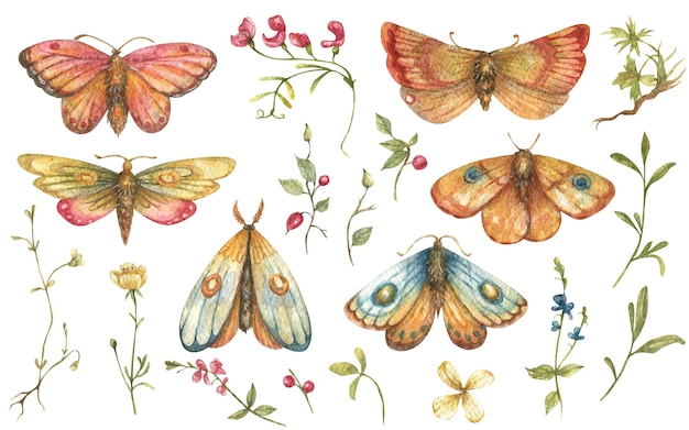Watercolor set of bright handdrawn butterfly moths along with wildflowers