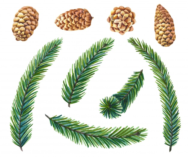 Watercolor set of green pine  .fir branches with cones christmas tree.