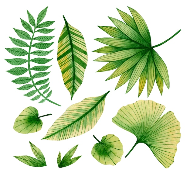 Watercolor set illustration of tropical leaves isolated on white background