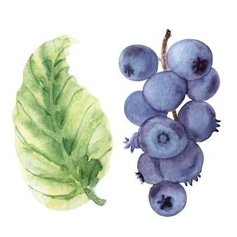 Watercolor set of illustrations with various berries