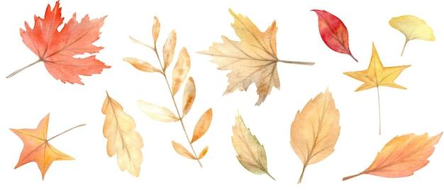 秋のオレンジと赤の葉の水彩セット