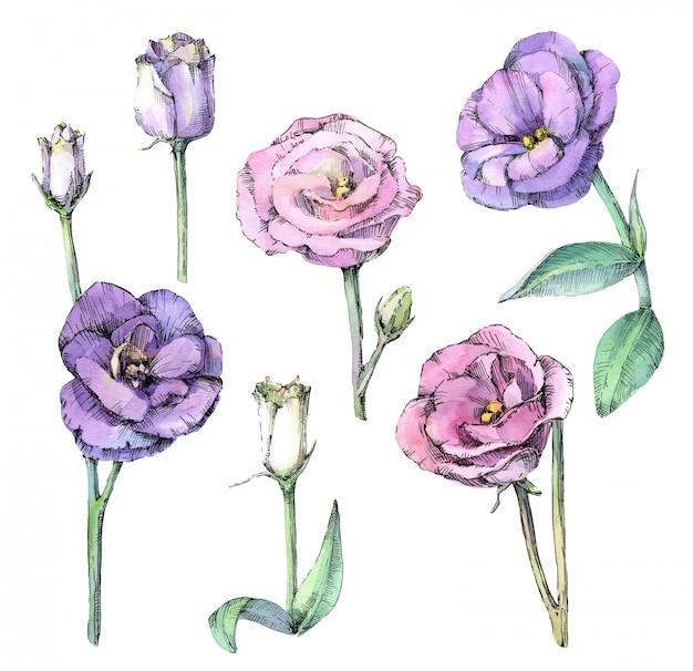 美しいトルコギキョウの花の水彩セット。分離された手描きのスケッチ