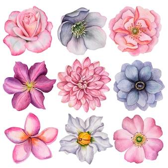 さまざまな花の水彩セット、アネモネ、ダリア、クレマチス、ローズ、ローズヒップ、プルメリア、ヘレボルスの花の手描きイラスト。白で隔離塗られた花の要素。