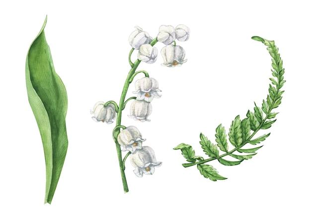 シダと野生のエゾボウフウの白い花の水彩セット