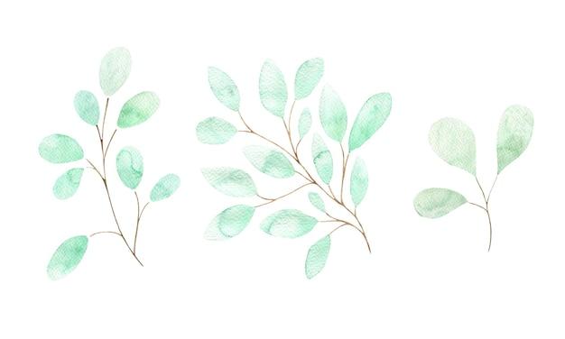 Акварельный набор зеленых весенних веток с листьями изолированными элементами