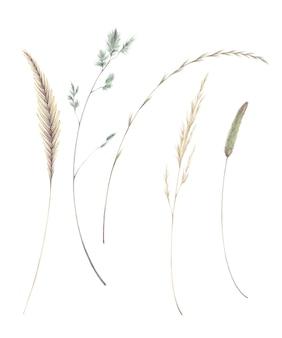 白い背景のフィールド草に分離された草の小穂刃のイラストの水彩セット