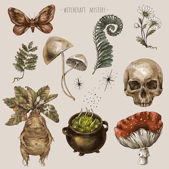 Акварельный набор волшебных растений, набор стикеров witchcraft mystery. корень мандрагоры, грибы, цветы, ромашка, мухомор, листья папоротника. рисованной иллюстрации, изолированные на белом фоне