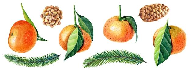 잎, 녹색 크리스마스 트리, 솔방울이 있는 귤의 수채화 세트.