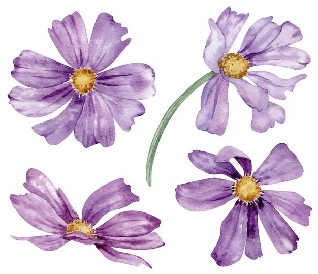 Watercolor set of purple summer flowers