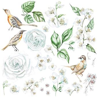 バラとジャスミンの花、鳥をセットした水彩画。図