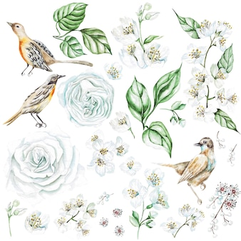 Watercolor set with roses and jasmine flowers, birds. illustration