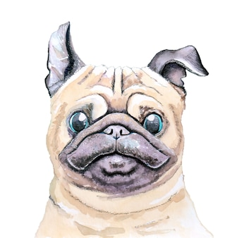 Watercolor sketch of a dog with blue eyes. pug on a white background for poster, pet shop or postcard.