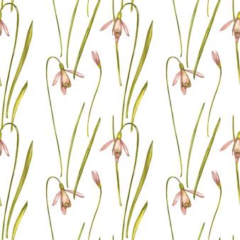 水彩スノードロップの花。シームレスパターン。白で隔離される野生の花セット。植物の水彩イラスト、スノードロップブーケ、素朴な花。