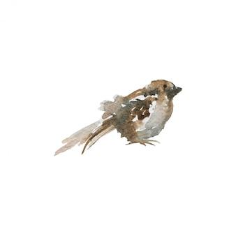 水彩スズメ、サイドビュー。白の手描き鳥