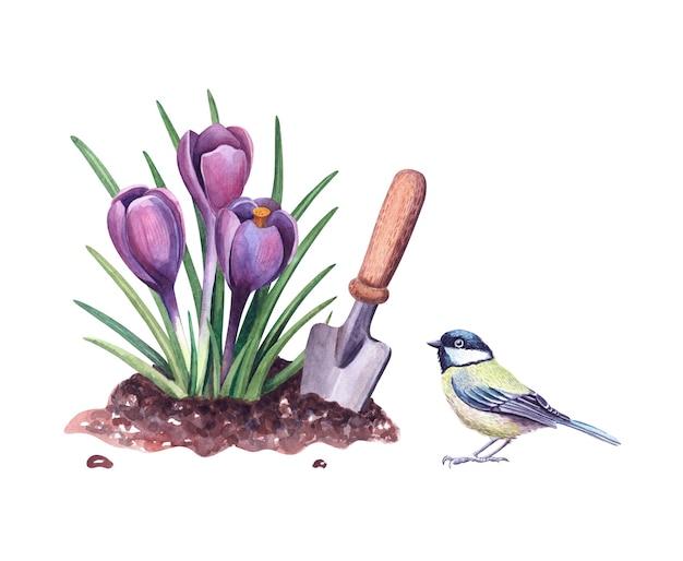 수채색 봄 크로커스는 흙과 삽, 짹짹 새입니다. 식물 그림입니다. 보라색 Snowdrops 꽃과 흰색 배경에 정원 도구 격리 됨. 프리미엄 사진