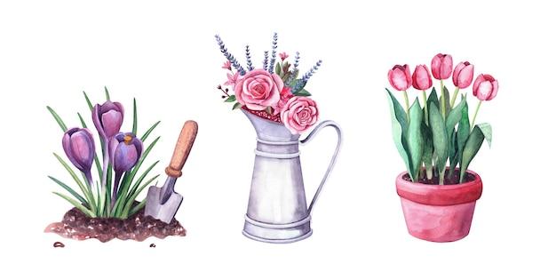 토양과 삽에 있는 수채색 봄 크로커스, 냄비에 빨간 튤립, 빈티지 금속 투수에 장미, 로반다, 딸기가 있는 꽃꽂이. 흰색 배경에 고립 된 그림