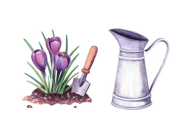 흙과 삽에 있는 수채색 봄 크로커스, 빈티지 금속 투수. 흰색 배경에 그림입니다. 농가 장식