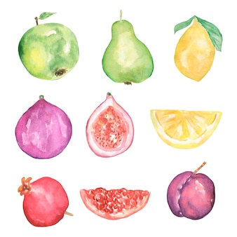Набор акварели летних фруктов