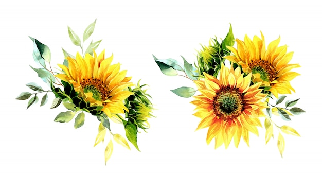 Watercolor sunflower bouquets illustration.