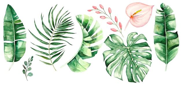 水彩の熱帯の葉と花。植物のジャングルのイラスト。エキゾチック。水彩セット