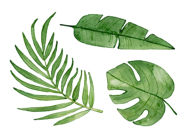 Watercolor tropical leaves isolated.