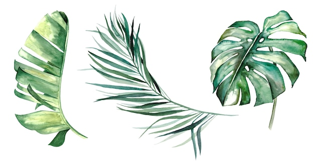 Watercolor tropical leaves set illustration - monstera, palm and banana leaves isolated