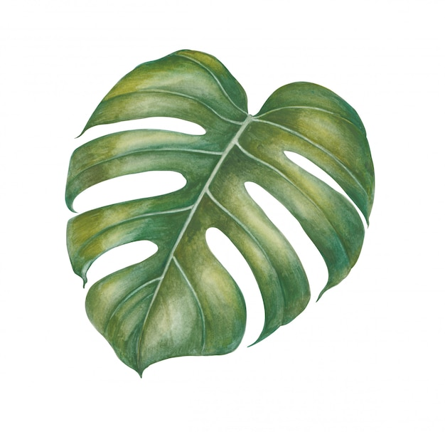 Watercolor tropical plants leaves.