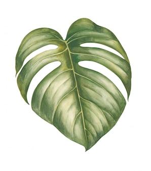 Watercolor tropical plants leaves.