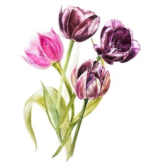 Акварельные тюльпаны цветы. весна или украшение лета флористическая ботаническая иллюстрация. акварель изолированы. идеально подходит для приглашения, свадьбы или поздравительных открыток.