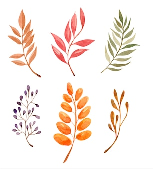 Watercolor vector autumn branches with leaves isolated on white