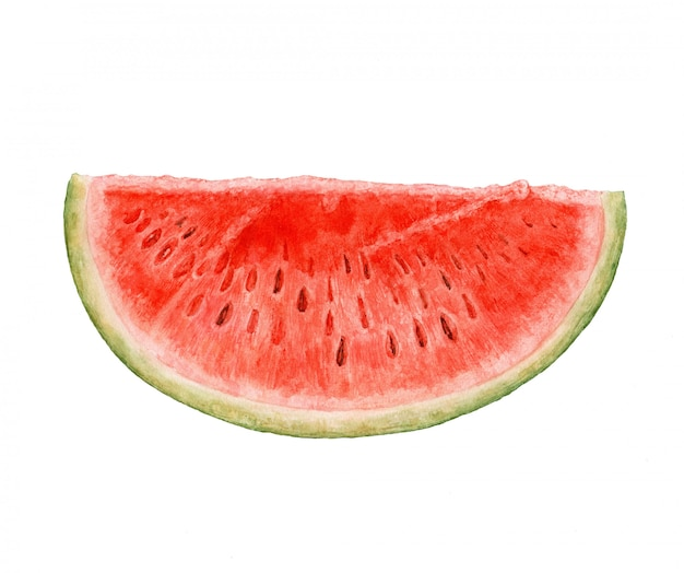 Watercolor watermelon isolated on white background.