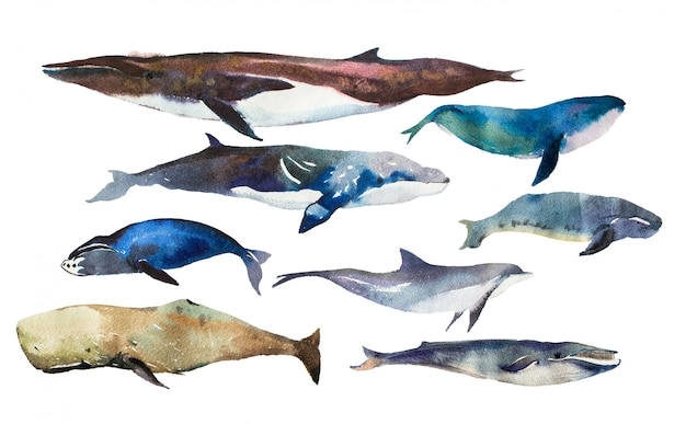 Watercolor whales set