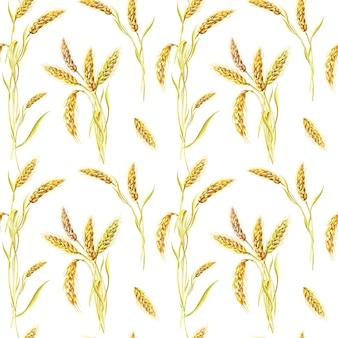 Акварельная пшеница на белом фоне. бесшовные модели. акварель лето