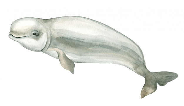 Watercolor white dolphin