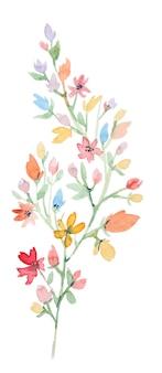 水彩野花の枝。白い背景で隔離の手描きの花の要素。