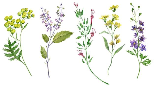 水彩野花。美しい夏の長い茎の牧草地の花。