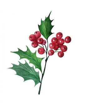 Watercolor with christmas holly flower