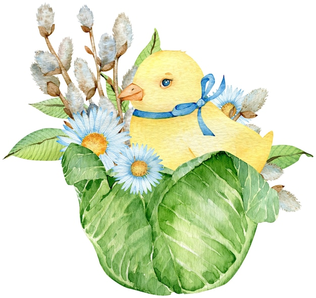 Watercolor yellow chick sitting in the cabbage with pussy willow and white flowers isolated