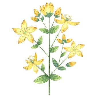 水彩黄色のツッサン