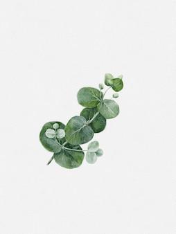 水彩絵の具ユーカリベイビーブルー丸い葉と枝。テキスタイルと背景の白い背景デザインに分離されたイラスト銀貨要素