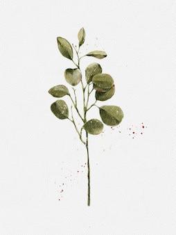 水彩絵の具ユーカリ丸い葉と枝。テキスタイルと背景の白い背景デザインに分離されたイラスト銀貨要素