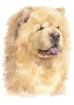 Watercolour painting of chow chow dog
